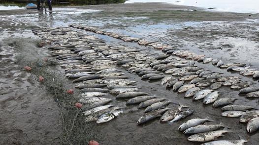 Ответственность за незаконную добычу  водных биологических ресурсов