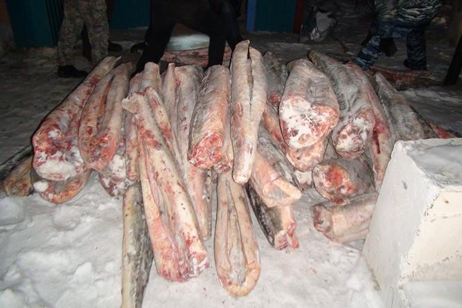 Изъятая рыба. Фото: 27.мвд.рф