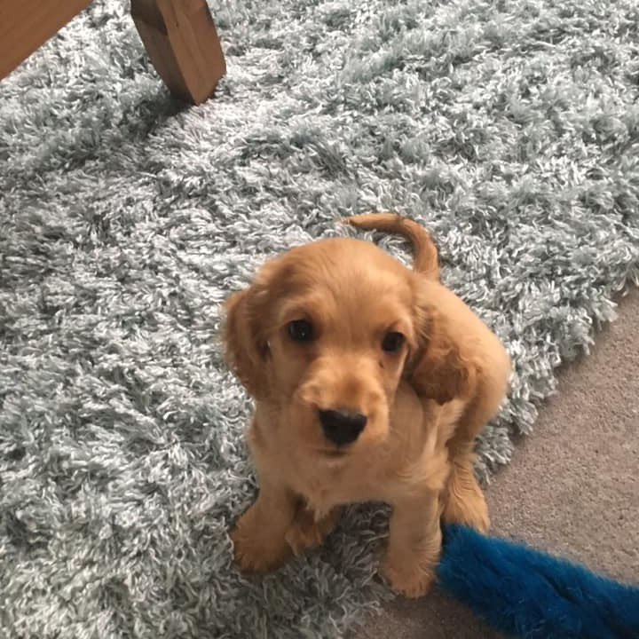 Perfect Puppy Class