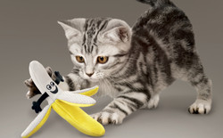 CA454_Better_Buzz_Banana_Lifestyle_edite