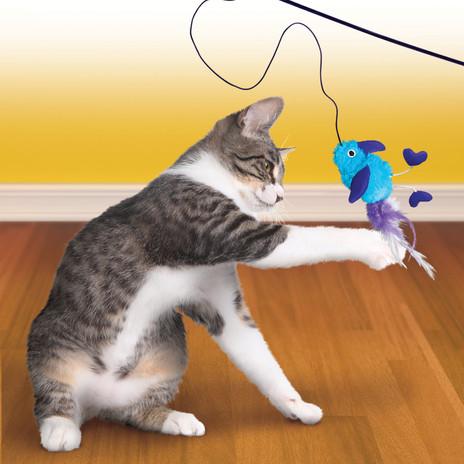 CAT41_Feather_Teaser_Lifestyle.jpg
