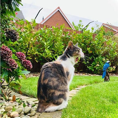 cat-fence-barrier-lifestyle-4__34393.160