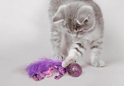 CNF4_Cat_Confetti_Lifestyle_edited
