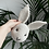 Thumbnail: Rabbit - Ivory