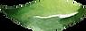 LeafyFloralElements_12.png