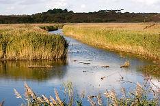 wetland-image.jpg