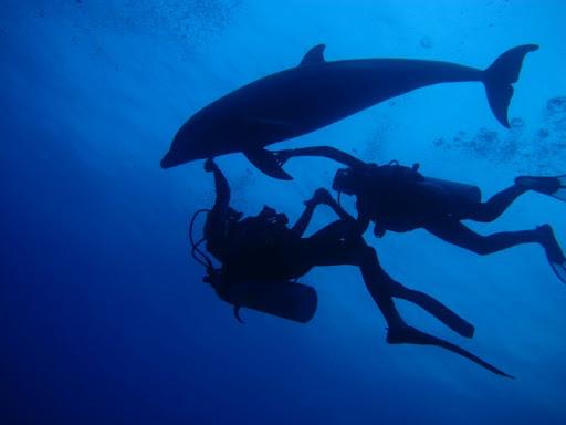 Plongée avec dauphins