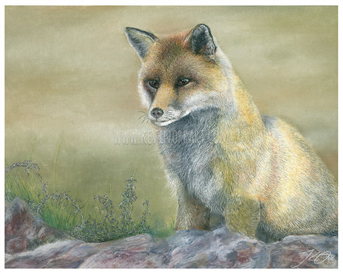 Painting of a fox in pastels. Fineart prints can be found here: