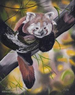 Red Panda (web).jpg