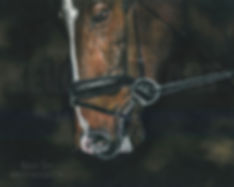 Horse 2 (Web).jpg