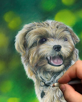 pet-portraits-dog-puppy-artwork-commissi