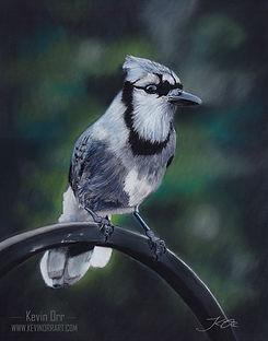 Blue Jay (web).jpg