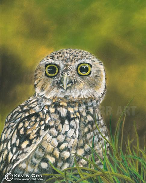 Owl Alone