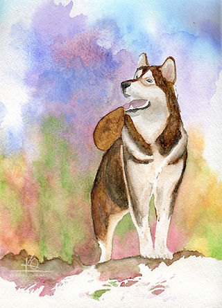 Watercolour painting of my dog, Micah.