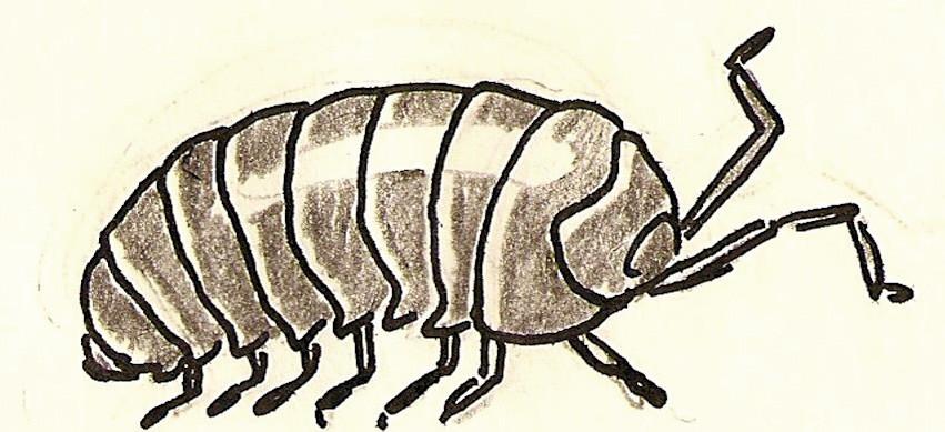 Slater Bug- Giftedness