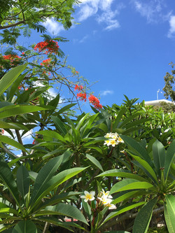 Jardin Belle Haven