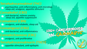 OVER 100 Cannabinoids in Cannabis!