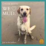Ginger Mutts Mud!