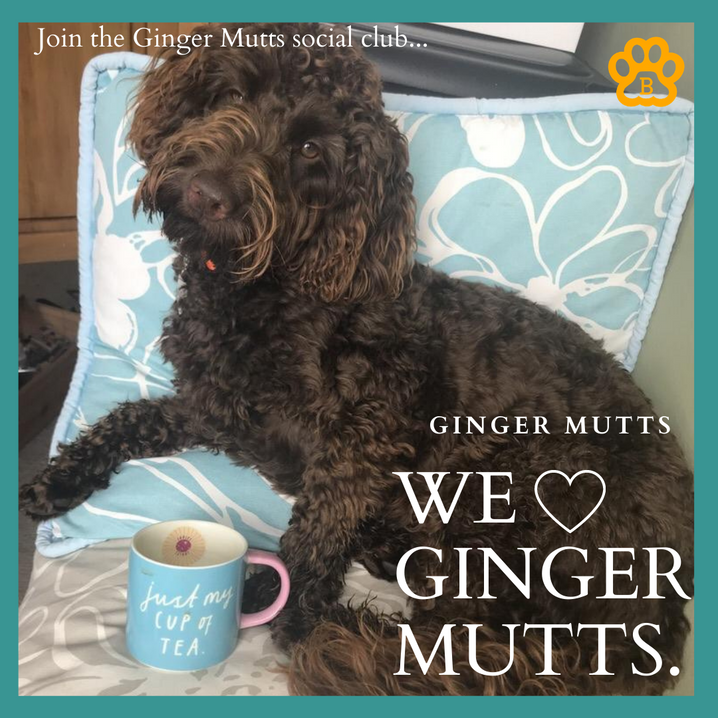 Ginger Mutts