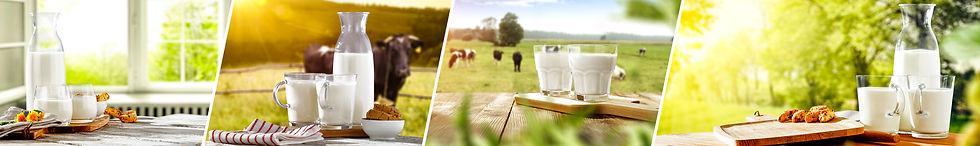 The source of milk.jpg