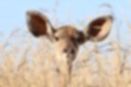 animal-animal-photography-barbaric-56187