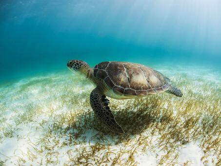 Top Attractions in Riviera Maya Mexico