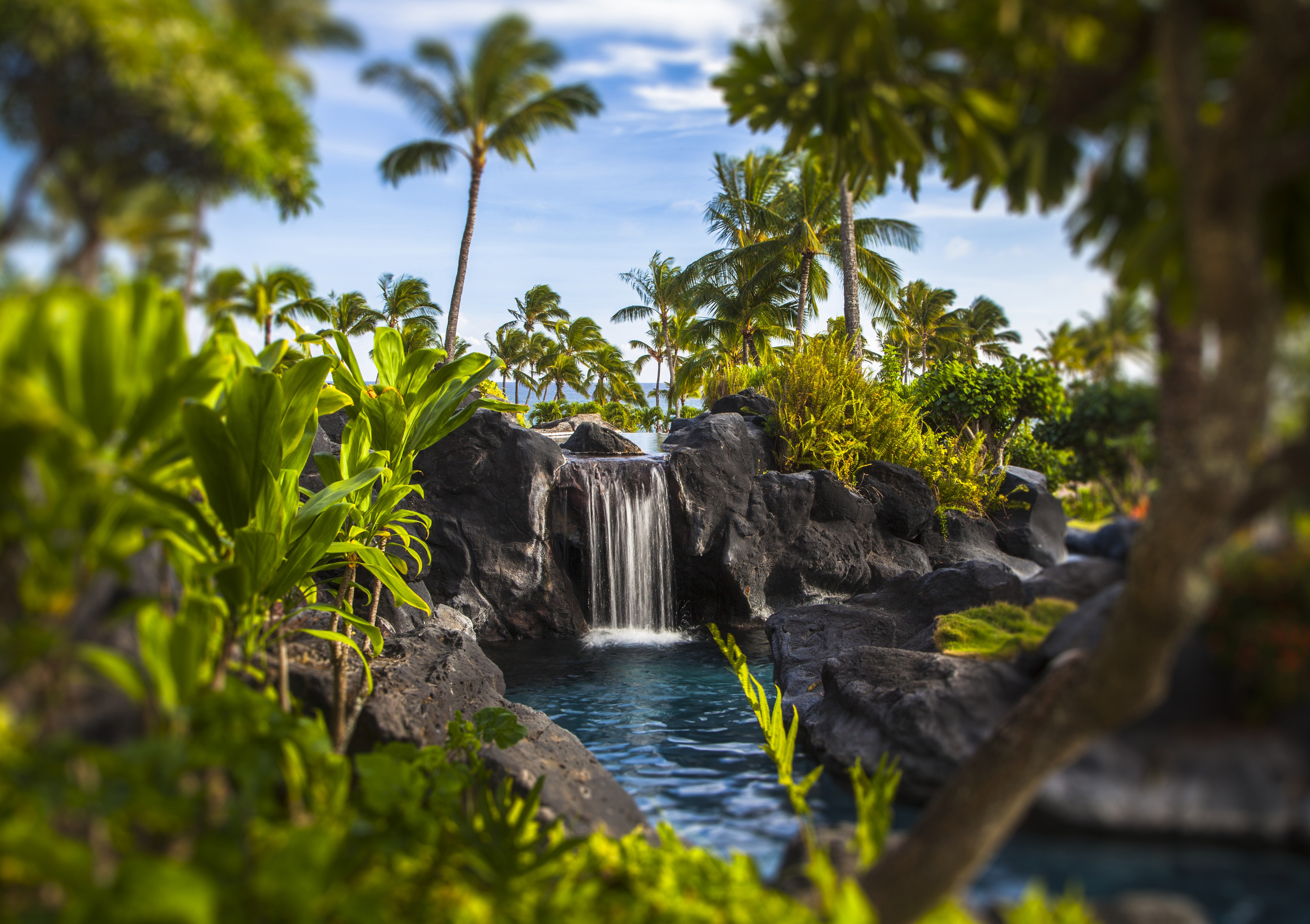 Travel Agency Hawaii Resort Grand Hyatt
