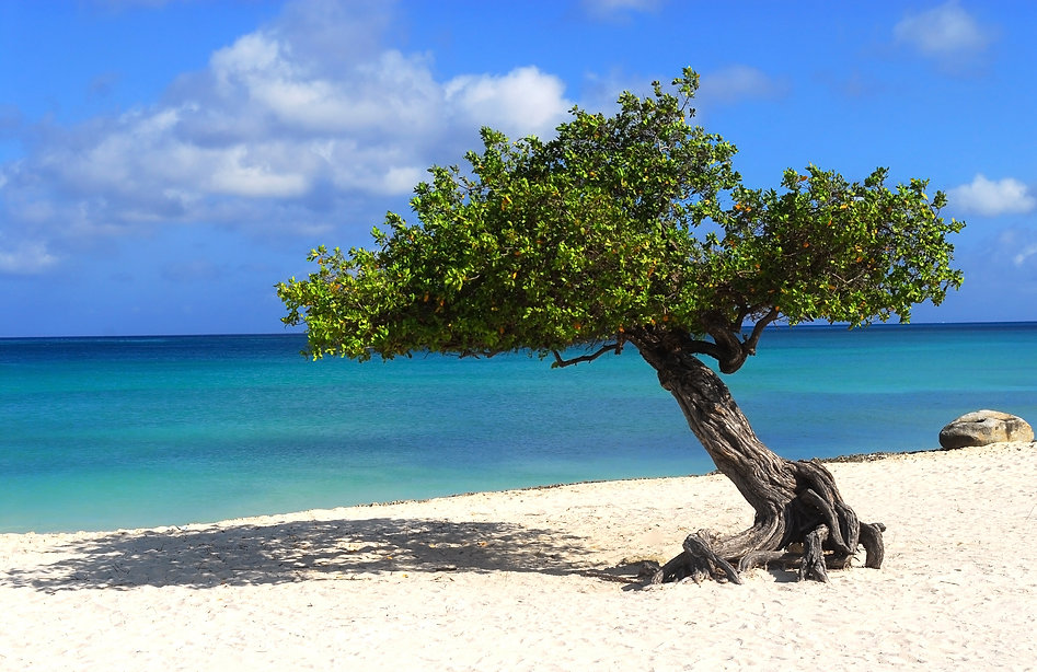 All-inclusive vacations and honeymoons in Aruba
