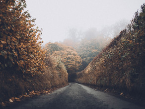 Feeling into the fall