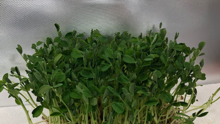 Peas - Speckled Lg