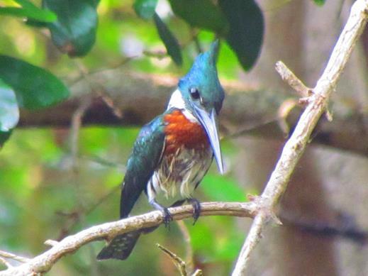 aves (2).jpg