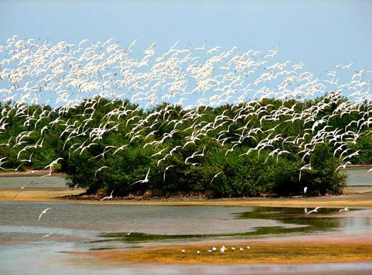 Isla Salamanca Manada Aves (Copy).jpg
