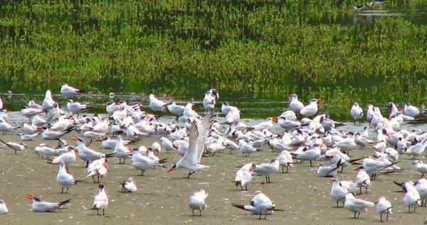 Aves Parque Natural Salamanca (Copy).jpg