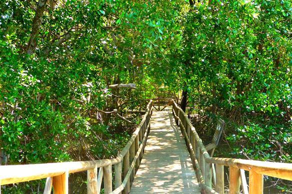 Salamanca Natural Park Tour | Barranquilla Daytours | Newtours Colombia