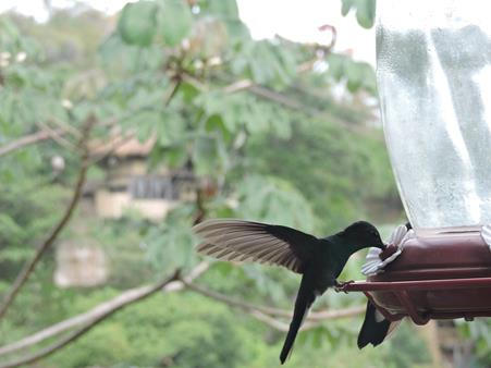 Birding Minca (Copy).JPG