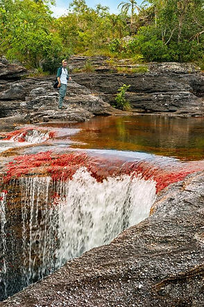 Caño Cristales | Destinos | Newtours Colombia