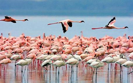 Flamingos Natural Park Tour | Riohacha Daytours | Newtours Colombia
