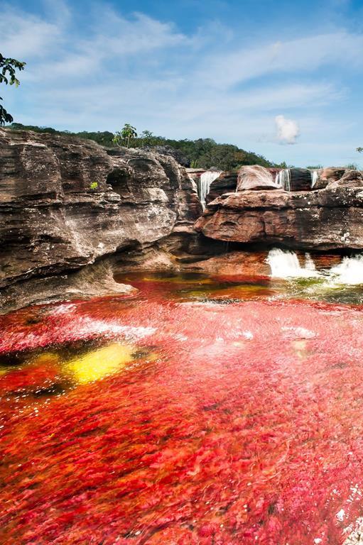 Cano-Cristales-Impresionante-rio-en-Colo