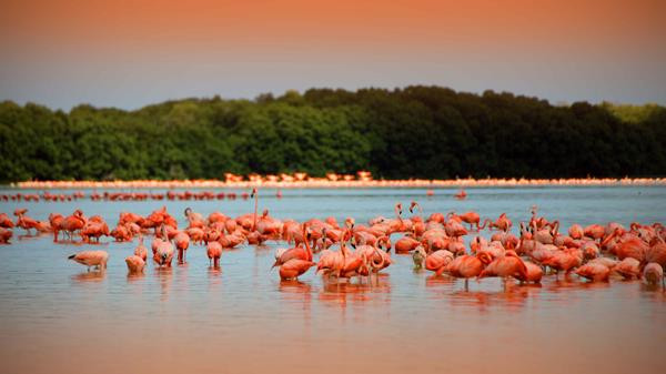 Los Flamencos Natural Park Tour   Newtours Colombia   Daytours