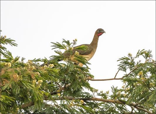 aves.jpg