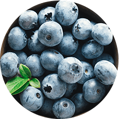 Blueberries Cultivated