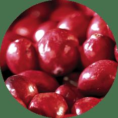 Cranberries Whole