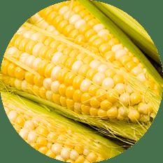 Corn Peaches & Cream - Grade A
