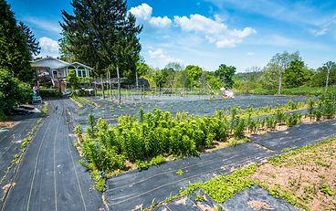 NV Expansive Garden.jpg