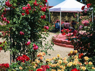 Reflection from Last Year's Rose Garden Brunch
