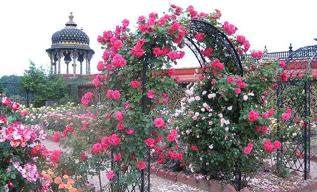 NV Rose Garden 2.jpg