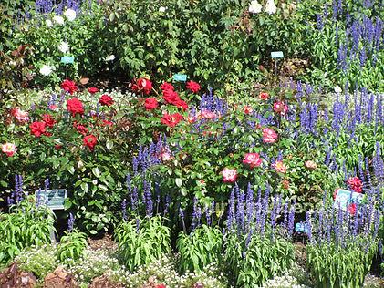 NV Rose Garden 1.jpg