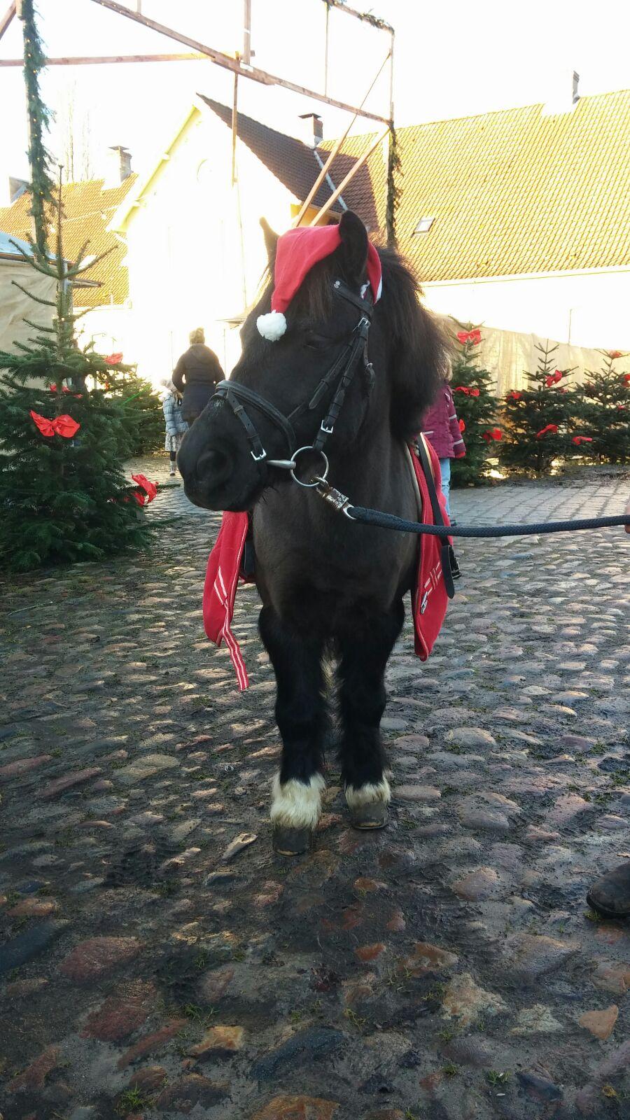 Billy als Weihnachtspony
