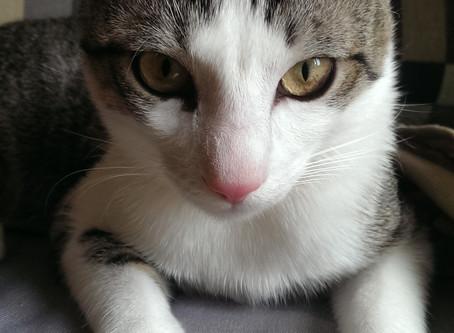Gatti e l'eterna dannazione della pipì in gi