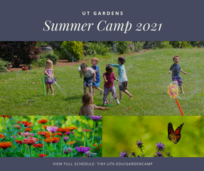 Summer Camp 2021 (1).png